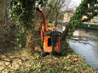Grand Union Canal tree clearance