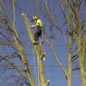 Tree Inspections and Reports