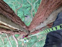 Winter Arboriculture Works
